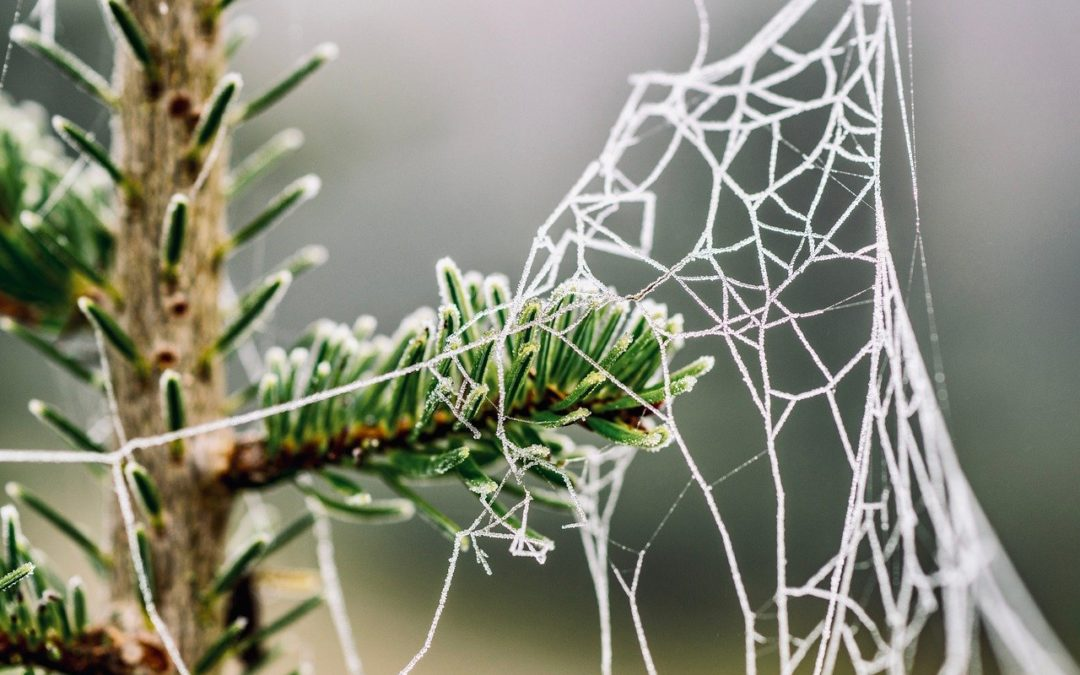 Biotalousfoorumi – webinaari 5.2.2021